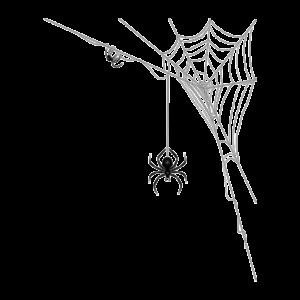 Essential Pest Ohio Spider Elimination