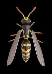 Essential Pest Ohio Wasp Elimination