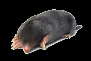Essential Pest Ohio Mole Elimination