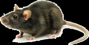 Essential Pest Ohio Mice Control